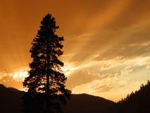 Tramonto Sapphire Mountains Montana Immagine Stock