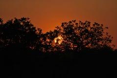 Tramonto in savana sudafricana immagini stock