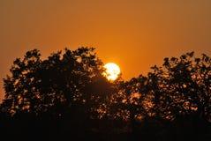 Tramonto in savana sudafricana fotografia stock libera da diritti