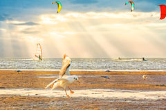 Tramonto scenico sulla riva di mare Fotografia Stock Libera da Diritti