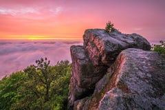 Tramonto scenico, traccia di montagna del pino, Kentucky Fotografia Stock Libera da Diritti