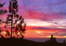 Tramonto in sequoia Fotografia Stock