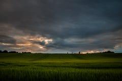 Tramonto sopra il giacimento di grano in Scozia Immagine Stock