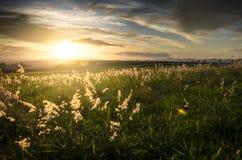 Tramonto sopra il paesaggio dell'erba Immagini Stock