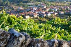 Tramonto sopra il pendio del vino Fotografie Stock