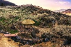 Tramonto sopra il villaggio del fiore della prugna Fotografia Stock