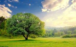 Tramonto sopra l'albero calmo Fotografia Stock Libera da Diritti