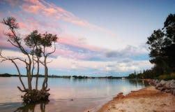 Tramonto sopra l'albero della mangrovia immagini stock