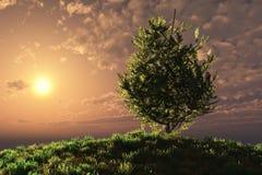 Tramonto sopra l'albero sul pendio di collina Fotografie Stock