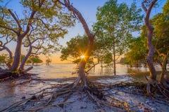 Tramonto sopra la foresta della mangrovia durante l'alta marea a Klong Mudong Phuket Fotografia Stock