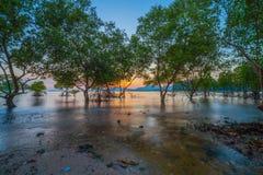Tramonto sopra la foresta della mangrovia durante l'alta marea a Klong Mudong Phuket Immagini Stock Libere da Diritti