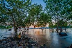 Tramonto sopra la foresta della mangrovia durante l'alta marea a Klong Mudong Phuket Fotografie Stock