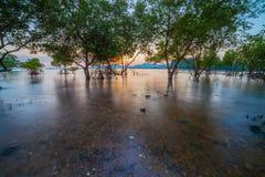 Tramonto sopra la foresta della mangrovia durante l'alta marea a Klong Mudong Phuket Immagine Stock
