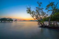 Tramonto sopra la foresta della mangrovia durante l'alta marea a Klong Mudong Phuket Immagine Stock Libera da Diritti