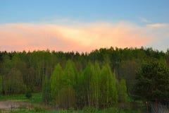 Tramonto sopra la foresta della molla Immagine Stock