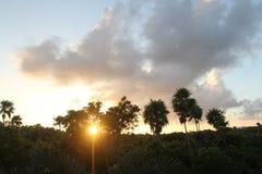 Tramonto sopra la giungla tropicale Fotografie Stock