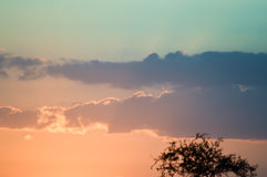 Tramonto sopra la savanna Fotografia Stock Libera da Diritti