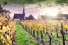 Tramonto sopra le vigne dell'itinerario del vino La Francia, l'Alsazia fotografie stock