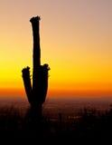 Tramonto sopra Phoenix con il cactus Immagini Stock