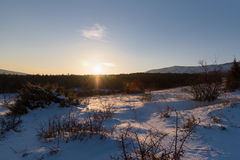 Tramonto spettacolare dell'abetaia di inverno fotografia stock libera da diritti