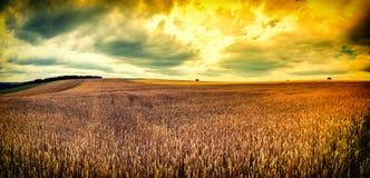 Tramonto spettacolare sopra il giacimento di grano immagine stock