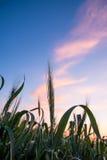 Tramonto su un cielo della prateria Fotografie Stock