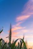 Tramonto su un cielo della prateria Fotografia Stock Libera da Diritti