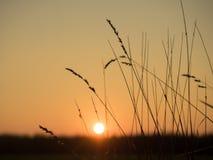 tramonto su una sera senza nuvole e su un'erba asciutta Fotografie Stock