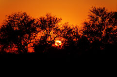Tramonto in Sudafrica Fotografia Stock Libera da Diritti