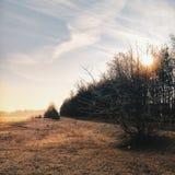 Tramonto sul campo di autunno Erba arancio congelata fotografia stock libera da diritti