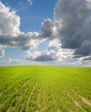Tramonto sul prato dell'erba. immagini stock