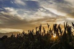 Tramonto sull'azienda agricola Fotografia Stock Libera da Diritti