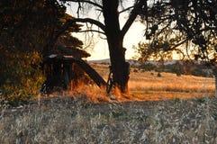 Tramonto sull'azienda agricola Fotografie Stock