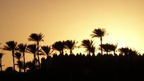 Tramonto sulla spiaggia intorno all'oceano ed alle palme Lasso di tempo video d archivio