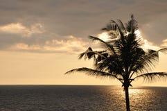 Tramonto sulla spiaggia tropicale con la palma immagine stock
