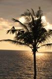 Tramonto sulla spiaggia tropicale con la palma immagini stock libere da diritti