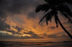 Tramonto sulla spiaggia tropicale con la palma fotografia stock