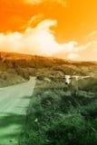 Tramonto sulla strada della montagna Immagini Stock Libere da Diritti