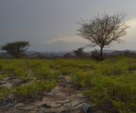 Tramonto sulla strada nell'Oman Fotografia Stock