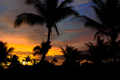Tramonto tramite le palme fiji Fotografie Stock Libere da Diritti