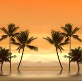 Tramonto tropicale Immagine Stock Libera da Diritti
