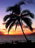 Tramonto tropicale Fotografie Stock Libere da Diritti
