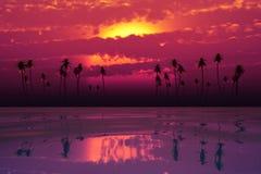 Tramonto tropicale con le nuvole rosa Immagini Stock Libere da Diritti