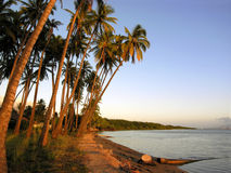 Tramonto tropicale della palma Fotografie Stock