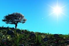 Tramonto tropicale, palma al sole immagini stock