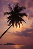 Tramonto tropicale Palme sui precedenti dell'oceano Pacifico thailand immagine stock