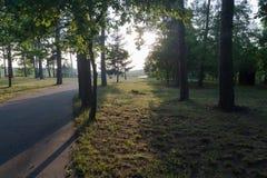 Tramonto in un parco in foresta nell'estate Fotografia Stock Libera da Diritti
