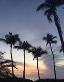 Tramonto variopinto con le palme e l'oceano Fotografie Stock