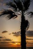 Tramonto variopinto sul Mediterraneo con la palma Fotografie Stock