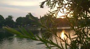 Tramonto verso il lago nel pomeriggio di estate fotografia stock libera da diritti